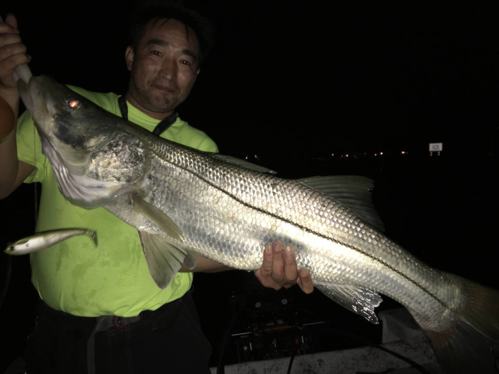 Monster snook fishing the mad snooker charter fishing for Snook fishing lures